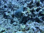 Hawaii Scuba divng 58