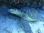 Hawaii Scuba divng 48
