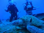 Hawaii Scuba divng 24