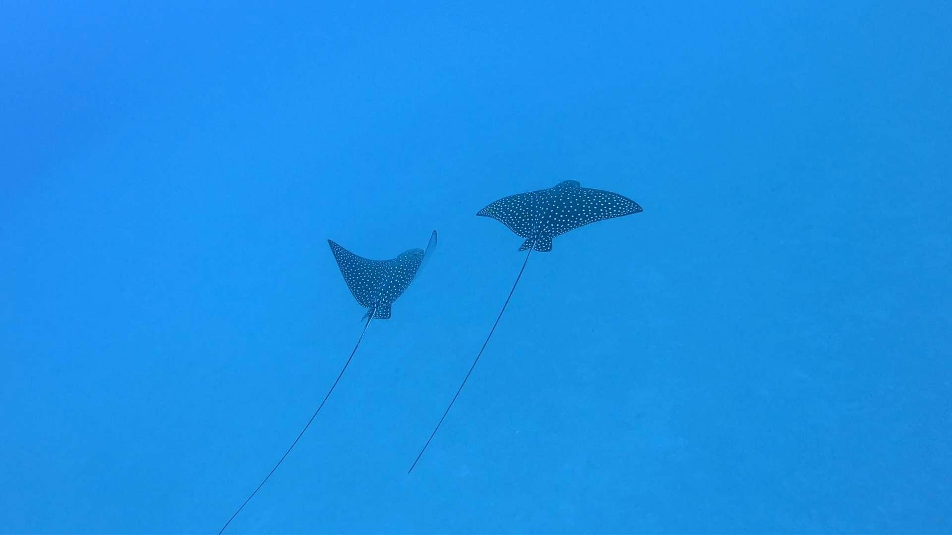 Hawaii scuba - 04-14-2019