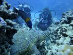 Hawaii Scuba divng 56
