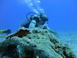 Hawaii Scuba divng 32
