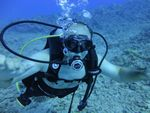 Hawaii Scuba divng 37