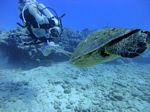 Hawaii Scuba divng 40