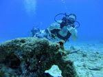 Hawaii Scuba divng 64