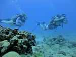 Hawaii Scuba divng 34