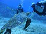 Hawaii Scuba divng 83