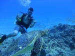 Hawaii Scuba divng 88