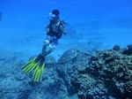 Hawaii Scuba divng 89