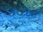 Hawaii Scuba divng 33