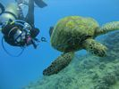 Hawaii Scuba diving 28