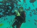 Hawaii Scuba diving 03