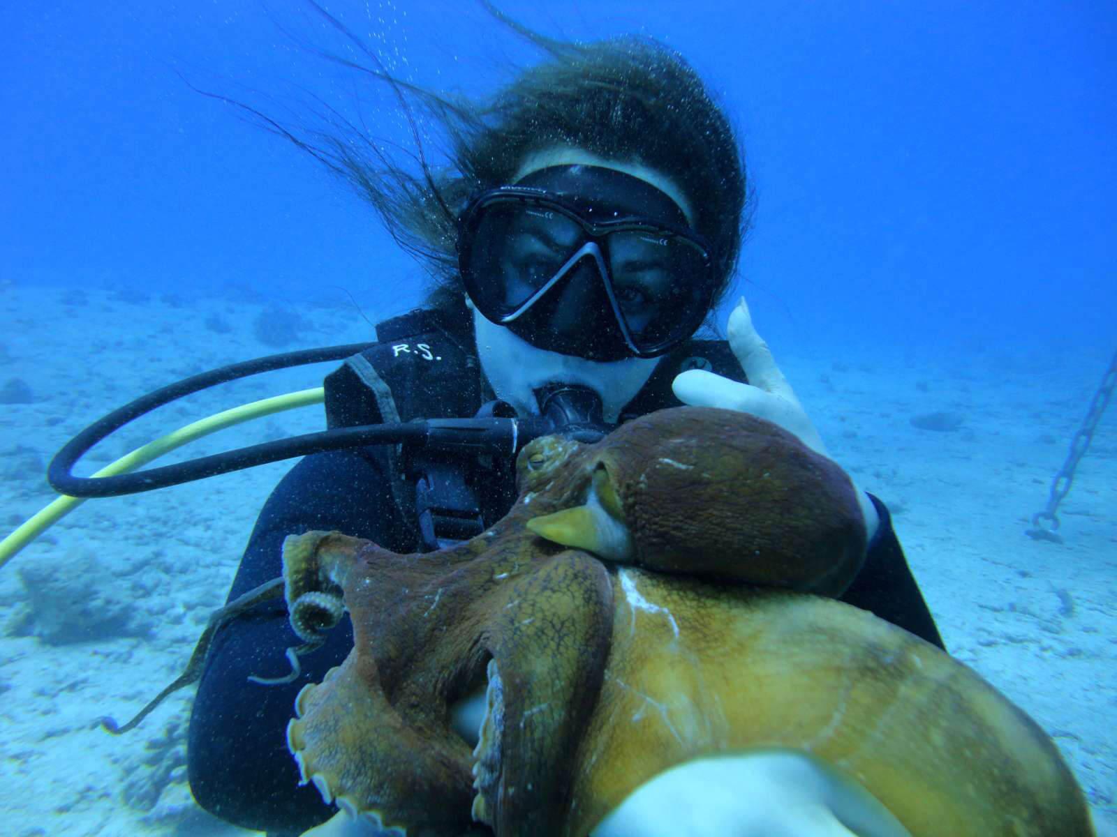 Honolulu Scuba Diving Tours Oahu Hawaii