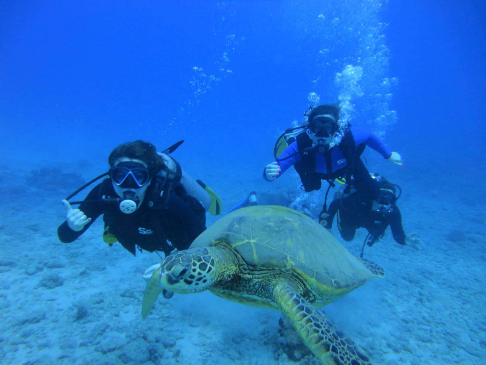 Hawaii scuba diving padi certification honolulu scuba lessons - Dive in scuba ...